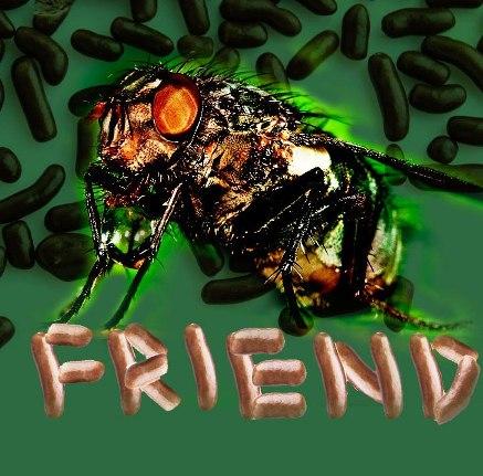 a-flys-work
