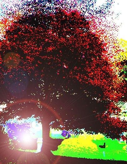 The Red Maple by Douglas Kolacki